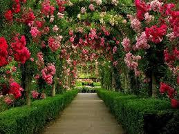 47-Starting a Rose Garden